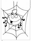 מר עכביש